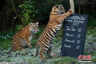 伦敦动物园举行年度盘点 人与动物趣味互动 组图