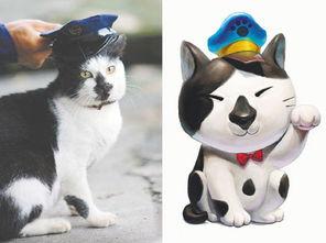 "W¢ krq澶村q-中新网8月30日电 据台湾《联合报》报道,流浪猫""黑鼻""是台北县瑞..."