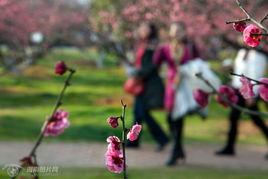 天暖春意浓 赏花正当时