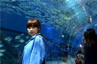 ...是梦幻唯美的 隔着透明玻璃,可以看到深邃幽蓝的海水中各种各样的...