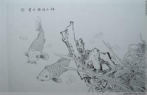 工笔画白描 鲤鱼