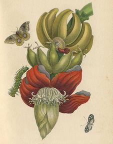 ...n)所绘的植物科学画.-博物课堂 6月11日亲子活动招募 多肉植物绘画