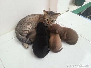 狗狗:我家的小狗狗就拜托给你照顾了.   猫咪:我TM没有奶怎么照顾...