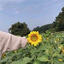 2018微信头像风景或花草唯美 阳光一点的微信风景头像230362018-02...