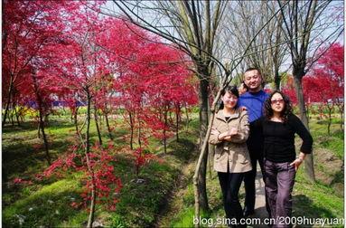 七枫花32部合集-日暖花满溪 醉在红枫林