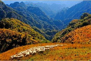 ...像了,您是一种什么样的感觉?--风吹草地见牛羊!!-十渡旅游去践...