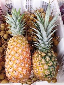 想吃凤梨却买个菠萝回来 教你轻松挑好凤梨