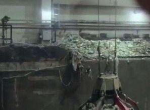 ...产生的65万吨粪便去哪了 说出来你都不敢相信