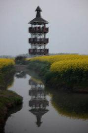 观景塔竖立在无涯的花海中,   油然成了一道亮丽的风景