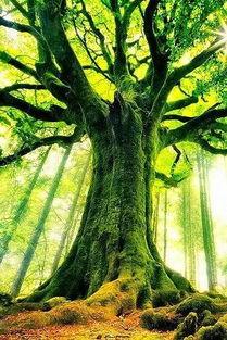 罕见的树,优美的诗