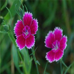 微信头像花朵图片真实唯美2018 最美微信风景花草图片头像