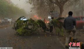 日起帝国无根之树-[提要]   2012年4月10日,印度新德里突遭暴风雨袭击,道路两旁的大树...