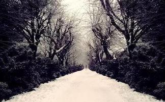 一场飘雪,一场梦
