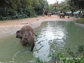 广州长隆野生动物世界 特定日成人票长隆野生动物园野生动物园是带小...