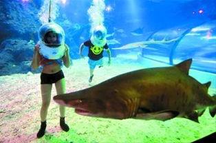 澳大利亚 海底漫步 来到国内 戴神奇头盔与鲨鱼共舞
