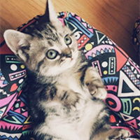 委屈脸大眼萌猫头像图片大全 小喵星人可爱萌头像