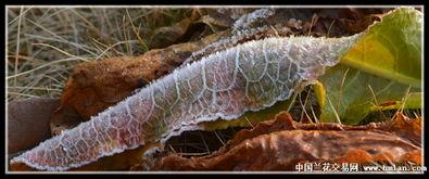 摄影习作 寒霜 大地的孕育