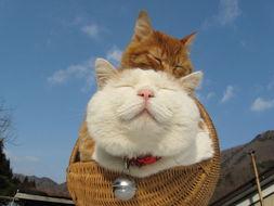 超级憨态可爱的猫叔图片 第三辑