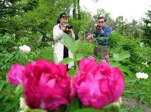 ...母女俩欣赏牡丹花 图片来源:网络-繁花似锦迷人眼 去牡丹江3大公园...