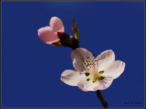 .在即将到家的刹那间,看到了那花儿已经绽放,再不去欣赏可能就已经...