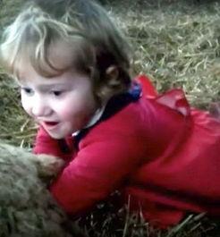 ...并将肉嘟嘟的小手伸进羊妈妈的产道,表情认真严肃.突然,莉莉...