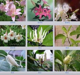 喊出植物的名字,认识植物的方法。