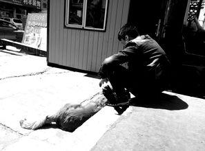 孤独的少年与狗