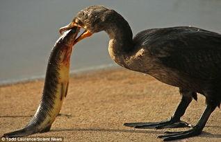 博狗bf88- 9月22日外媒报道,近日,在美国佛罗里达州博因顿海滩的国家野生动...
