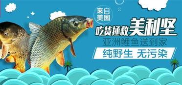 美国亚洲鲤鱼今日上线销售 好不好吃用舌头决定