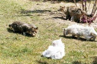 ...坪上,人们已经见多不怪.这些流浪猫也已经习惯了在垃圾堆里寻找...