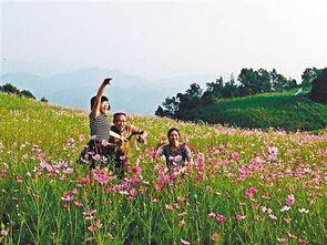 日,巴南区二圣镇天坪山,5000亩盛开的格桑花吸引游客前来玩耍....