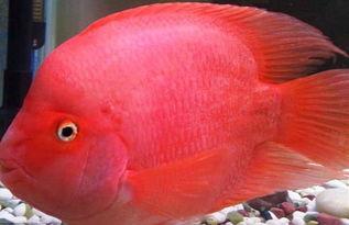 财神鱼和什么鱼一起养