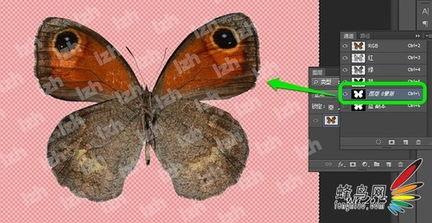 可自由添加白色背景,以及其他颜色背景,效果如下:   添加白色背景...