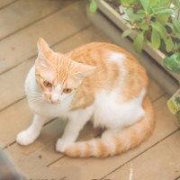 表情 好看呆萌猫猫头像 捉到一只小萌宝 可爱头像 表情