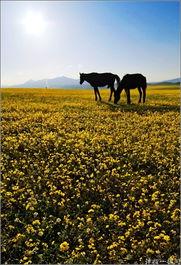 时明月在,曾照彩云归.5月8日是农历四月十四,傍晚在巩留恰西牧场...