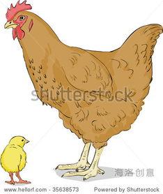 莴笋炖母鸡