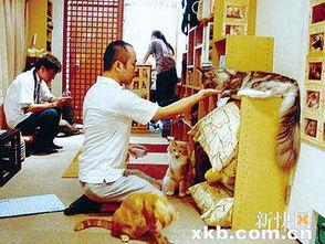 ,此工种只需要每天抚摸猫咪、和猫咪玩耍,就可以拿到高达2.4万元...