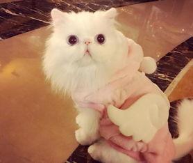 我要操逼图-12月20日晚,范冰冰在微博晒出爱猫照片,并写道: