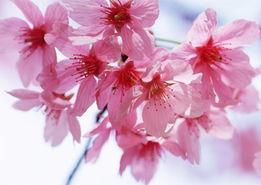 花草照片名称-花卉图片 花卉图片