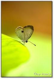 如何折纸蝴蝶