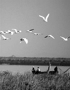 秋季来临,鄱阳湖候鸟自然保护区的多种夏候鸟开始集结南迁. 新华社...