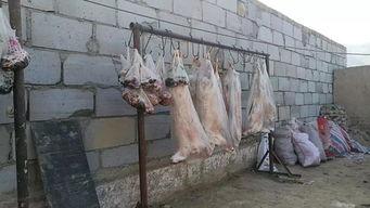 自愿被屠宰吃肉的许明梯-...牦牛都赶出山来宰杀了