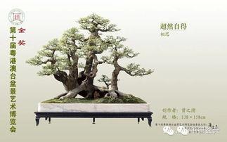 粤港澳台盆景艺术博览会金奖作品欣赏