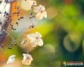 描写花的唯美语句