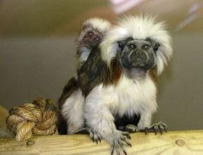 ...英国兰开夏郡的黑潭动物园(Blackpool Zoo)失窃的5只濒临灭绝...