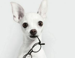 给狗狗取英文名