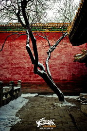 虽然比往年来的晚了不是一星半点儿,但这接连两场的大雪,也为北京...