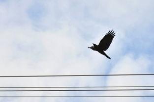 12月17日,北京太阳宫热力厂附近,一只鸟在蓝天下翱翔.京华时报记...