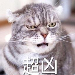 超凶-表情 QQ表情 QQ表情图片大全 QQ表情包大全下载 腾牛个性网 ...