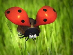 小世界,大智慧 一组透过昆虫看人间的动画片